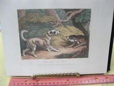 Vintage Print,Dog+Wolf,Work of Animals,Aesop,Gay,Phaedru s,Howitt,1811