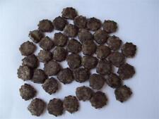 50 Fresh seeds Gac Fruit Momordica cochinchinensis exotic vine plant RARE