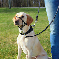 Black Top Trainer Training Harness Dog Head Harness XL-Short Snout
