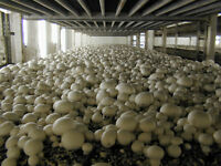Mushroom Cultivation Growing Culture Spawn Making Fungi Edible 30 Books CD