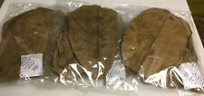 30 Indian Almond Leaves 10-15cm Catappa Ketapang for Fish, Shrimp, Aquarium