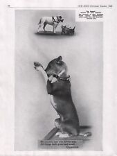 "BASENJI 1949 DOG BREED KENNEL ADVERT PRINT PAGE ""FAIRY OF THE CONGO"" PRAYING"
