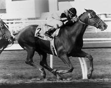 1978 Triple Crown Champion AFFIRMED Glossy 8x10 Photo Steve Cauthen Print Horse