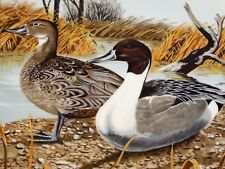 Pretty 1987 Collectors Plate The Pintail The Original Wild Duck Collection #4