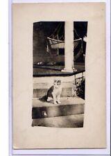 Real Photo Postcard RPPC - Animal - Cat on Steps