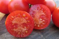 10 graines de tomate bio MON AMOUR précoce savoureuse très productive résistante