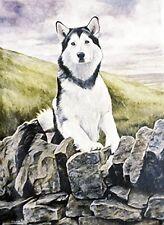 ALASKAN MALAMUTE SLED DOG DOG FINE ART LIMITED EDITION PRINT