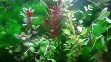 35 Live Aquarium Plants Collection Of Aquatic Plants For Your Fish Tank