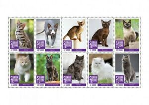 Sierra Leone - 2020 Cat Breeds, Bengal, Maine Coon - 10 Stamp Sheet