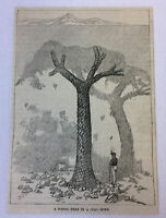1887 magazine engraving ~ FOSSIL TREE IN A COAL MINE