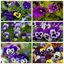 100 Pansy Flowers Seeds Viola Tricolor Violet Tricolor Mix Annual Garden Plant