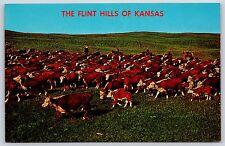 The Flint Hills of Kansas Longhorn Cattle Drive Grazing Chrome Postcard Unused