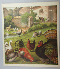 POULTRY BIRDS ROOSTER CHICKEN HEN PHEASANT GEESE ANTIQUE PRINT LITHOGRAPH 1872