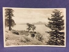 Pine trees on lake shore real photo postcard