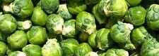 Brassica Oleracea Vegetable 100 Seed Healthy Nutritious Foods Winter Home Garden