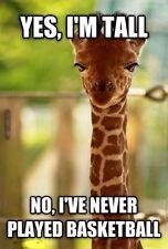 "Funny  Giraffe  refrigerator magnet 2 1/2x 3  1/2 """