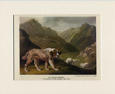 OLD ENGLISH SHEEPDOG IN THE HILLS OLD 1940'S DOG PRINT MOUNTED READY TO FRAME