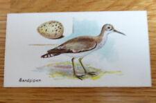 TOBACCO CARD LAMBERT & BUTLER BIRDS & EGGS #33 SANDPIPER 1906