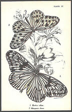 1890's BUTTERFLY INSECTS color chromolithograph - #IV