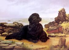 More details for newfoundland newfi black dog fine art limited edition print fishermans friend