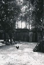 LANDES c. 1935 - 5 Photos  Molietz  Ferme  Plage  Nouvelle Aquitaine  - L 98