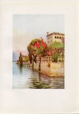 Stampa antica OLEANDRI in un giardino AFFACCIATO sul LAGO D' ORTA 1905 Old Print