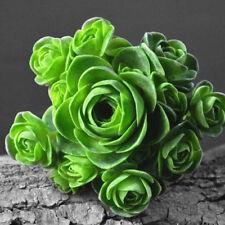 50X green mountain rose seeds temperate garden greenovia flowers bonsai plant 3C