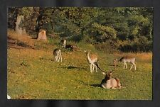 Posted 1975 view of Deer in the New Forest, Hampshire