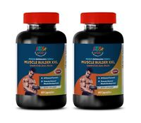 Muscle BuilderXXL Promotes Natural Joint Growth Ant-Aging  Bones  2B