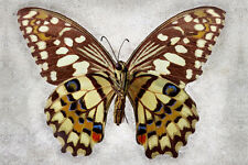 Unknown Verso Buterfly Art  by Richard Reynolds Canvas Giclee Museum Wrapped