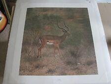 "Charles Frace "" Impala"" LE 4/2000 Signed  24x 26"" art print"