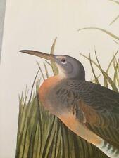 Clapper Rail Salt Water Marsh Hen Audubon Bird Print Picture Plate 136