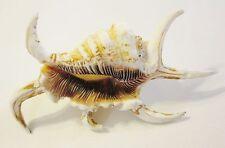 Spiky Seashell