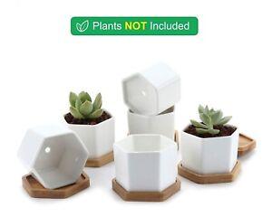 6pcs 7CM Succulents Home Plants Hexagonal Pots Cactus Bamboo Trays Ceramic White