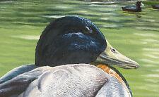 Original Oil Painting Ducks Bird Wildlife Pond California Landscape Forest Trees