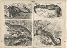 "Crocodiles (""Krokodile""), Antique German 1888 print."
