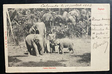 1903 Colombo Ceylon RPPC Real Picture Postcard Cover To Tonkin Elephants