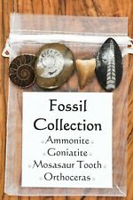 Fossil Collection CHRISTMAS GIFT Ammonite Goniatite Mosasaur Tooth Orthoceras