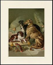DEERHOUND GREYHOUND CAVALIER KING CHARLES SPANIEL DOG PARROT LOVELY PRINT