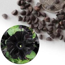 Rare super black petunia flower seed 100 Cows seeds / bag bonsai Morning-Glory