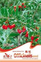 1 Bag 50 Seeds Barbary Wolfberry Lycium barbarum Herb Seed E006