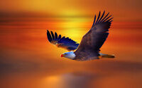 Modern Home Decor bird Animal Eagle oil painting picture Printed on Canvas 0702