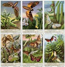 Chromo Liebig Sang. 1497 ITA Lepidotteri Notturni ANNO 1950
