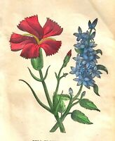 "1846 Hand-Colored BELL FLOWER & PINK Botanical Floral 5""x8""  BRIGHT ENGRAVING"