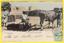 cpa EGYPTE Type Métier Le LABOUREUR Attelage Machine Agricole Le HACHE PAILLE