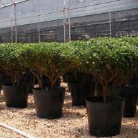 100pcs Wholesale Watering Flower Plant Pot Plastic Auto Flowerpot Planter Basket