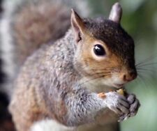 """""""This Stuff Really Works"""" Squirrel Poison Bait 8 Ounces Pellets Nuggest w/ Nuts"""
