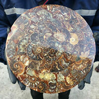 Natural Ammonite Disc quartz crystal Fossil Conch Specimen Healing 1PC 600g+