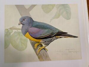 Louis Agassiz Fuertes & The Singular Beauty of Birds, Bruce's Green Pigeon Print