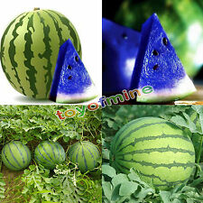 10Pcs Colorful Watermelon Seeds Vegetable Organic Home Garden Variety Plant